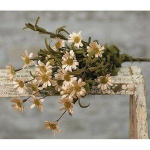 Teastain Mountain Daisy Bush Flowers